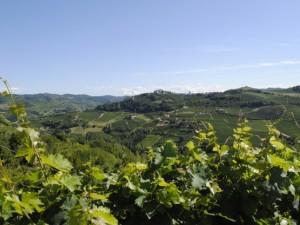 A taste of Monferrato